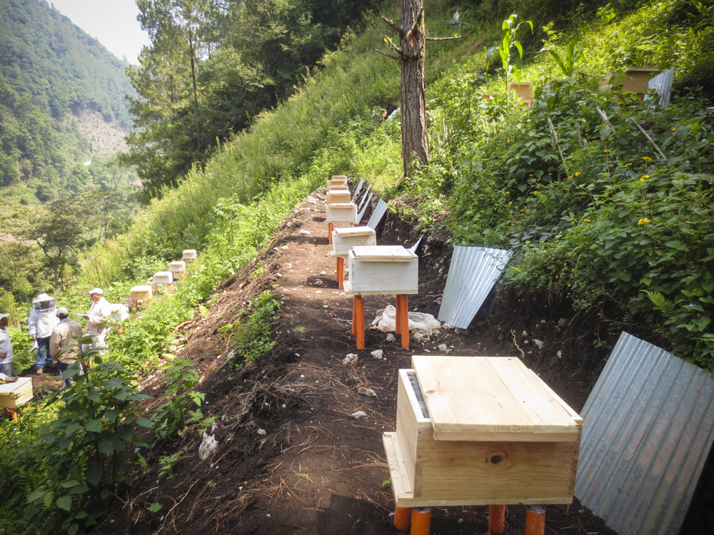 guatemala-beehives