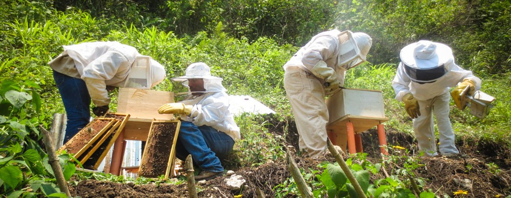 guatemala-bees2