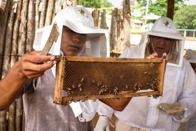 MayaIxil_panel_bees_comb_inspection-1000x667