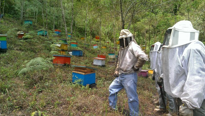 Cesmach_hives_colorful_hillside_beekeepers