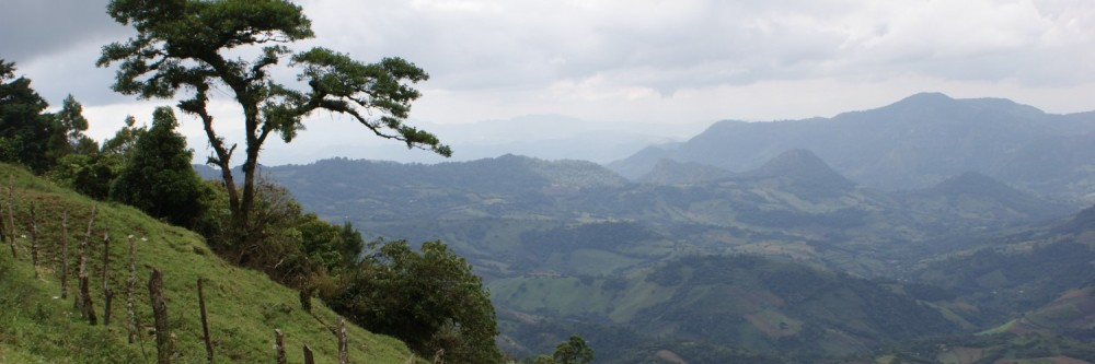 Coffee Farmers and Climate Change