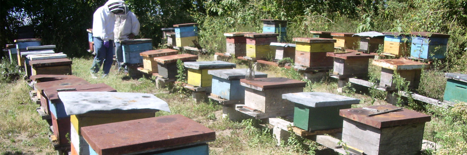 Beekeeping in Latin America