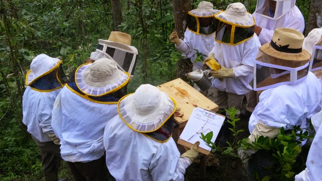 Beekeepers-in-training learn together at community apiaries.