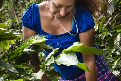 SOPPEXCCA_woman farmer in blue