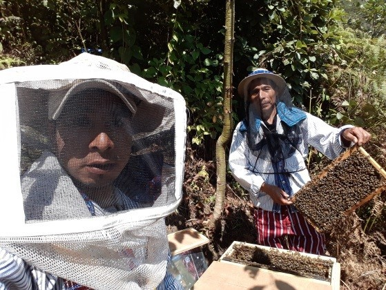 ACODIHUE beekeepers harvesting honey