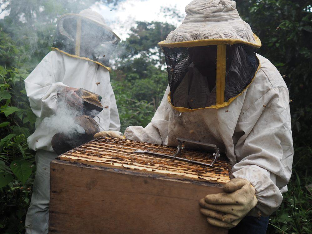 Maya Ixil Beekeepers