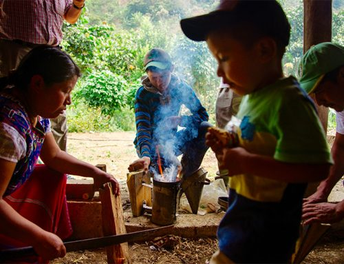 Forests Feeding Families: Grow Ahead & Food 4 Farmers Launch New Programs