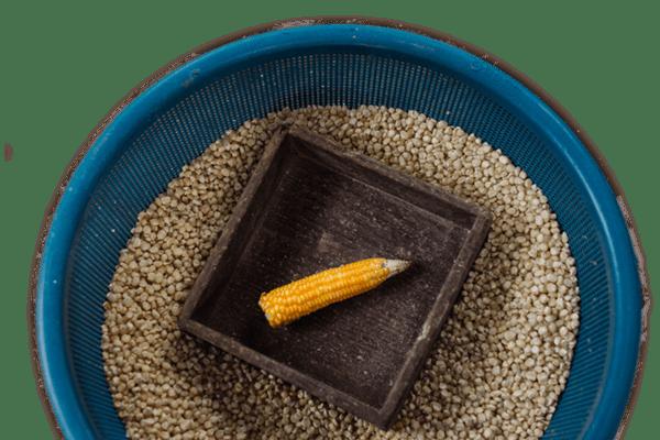 Life in Coffeelands corn image Guatemala