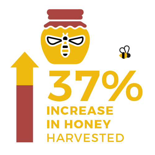 37 percent increase in honey harvested - food 4 farmers 2019