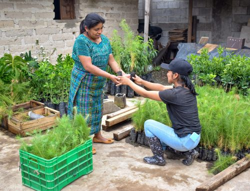 Forests for Farmers: Agroforestry as a Food Security Strategy