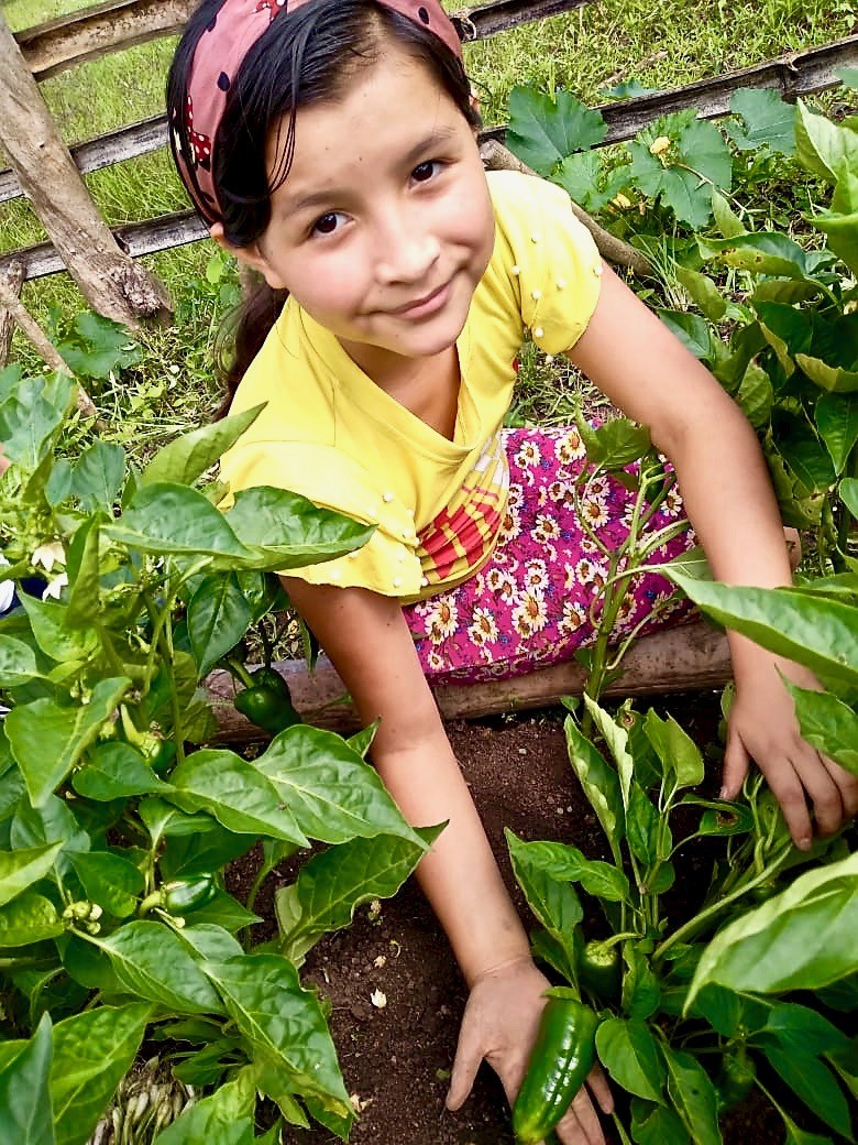 A student part of our school garden program with SOPPEXCCA shows the progress of their growing crops. Our school garden programs at 13 Nicaraguan schools in communities where we work are teaching children to grow and eat healthy, fresh food.